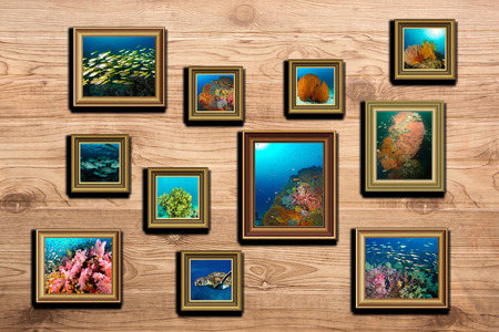 seafan: the collage marine life underwater photo
