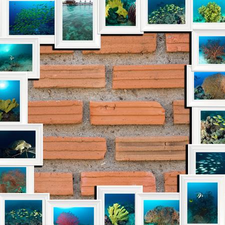 sipadan: the collage marine life Sipadan, Malaysia underwater photo