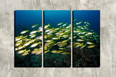 seafan: the collage marine life Sipadan, Malaysia underwater photo