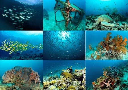 seafan: the collage Sipadan, Malaysia photo