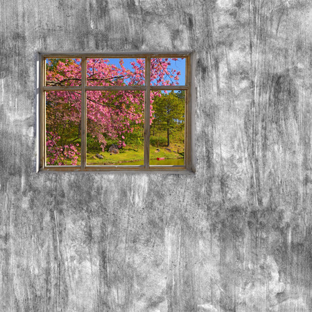 windows frame: windows frame on cement wall and view of nature