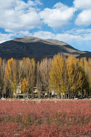 chuan: Red meadow under blue sky with Yellow Tree and Mountain in Daocheng, SiChuna, China