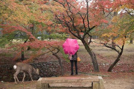 nara: Nara Park, Japan Stock Photo