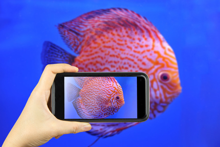 diskus: Taking photo on smart phone concept.