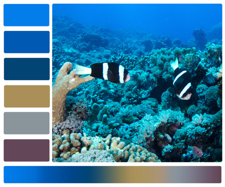 coral bark: marine life underwater with color palette swatches Stock Photo