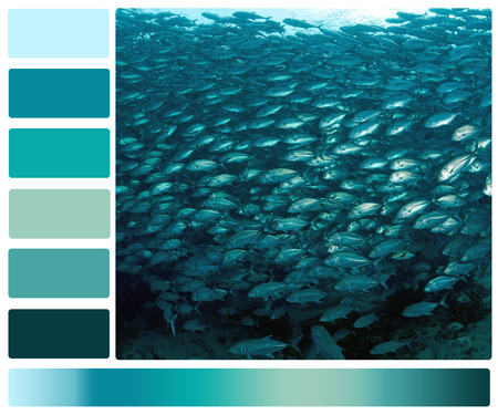 color color palette: marine life underwater with color palette swatches Stock Photo