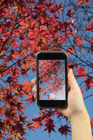 koyo: take photo with colorful Autumn Leaf Season in Japan Stock Photo