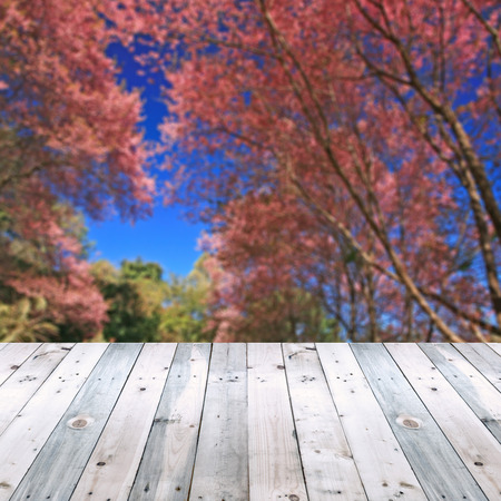 tunel: empty wooden plank with sakura tunel defocused background