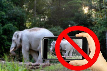 forbid: forbid sign no photo elephant Stock Photo