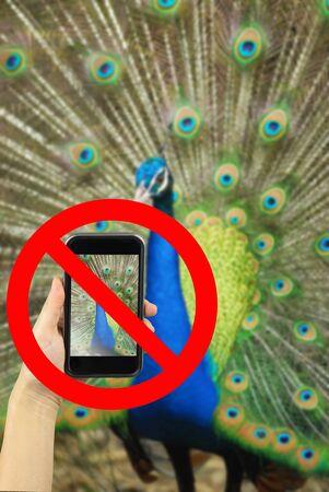 animal photo: Taking animal photo on smart phone concept with prohibit sign Stock Photo