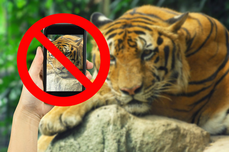 no cameras allowed: Taking animal photo on smart phone concept with prohibit sign Stock Photo