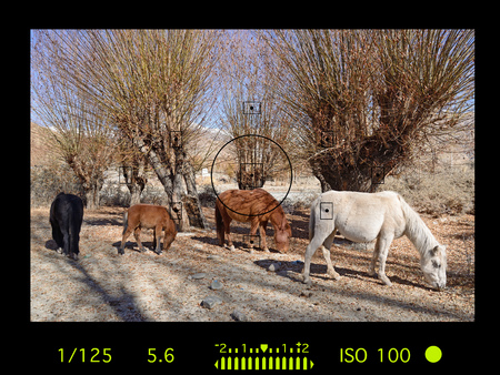 horse sleigh: camera viewfinder with exposure photo and camera settings. Stock Photo