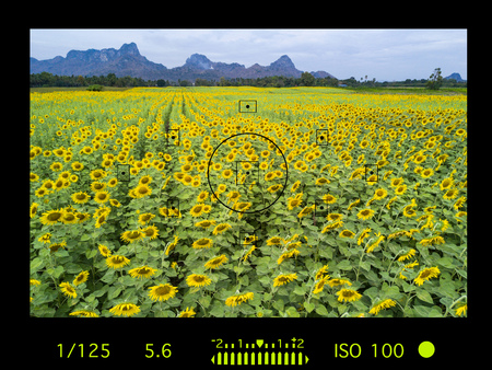 camera viewfinder with travel destination attraction. sunflower field, Lopburi, Thailand. Stock Photo