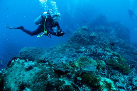 sharm:  Reef and Marine life in Chumphon Marine National Park, Thailand