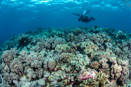 Abundance reef and marine life in Wakatobi National Park, Indonesia.