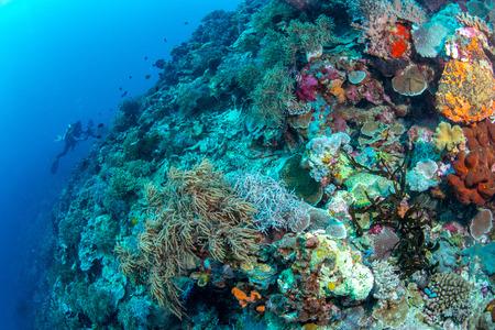 Abundance reef and marine life in Wakatobi National Park, Indonesia.