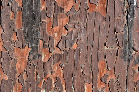 deteriorated: Grunge cracked paint texture on old wood gate