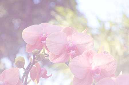 whittle: Bouquet of orange soft blur background in vintage pastel tones Stock Photo