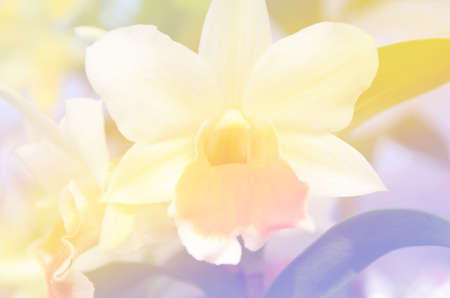 whittle: Colorful flowers and blur the background