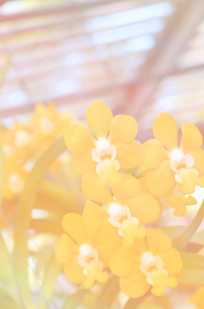 whittle: Soft blur of hydrangea flowers in vintage style soft pastel colors for the background