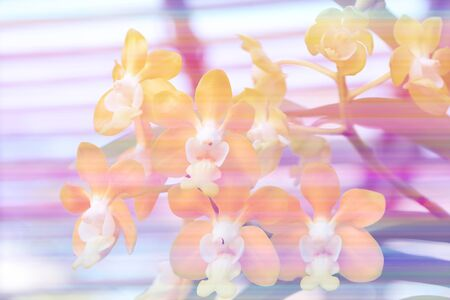 whittle: Background color flower style soft background Stock Photo