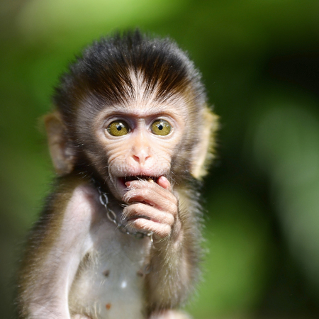 genitali: Cucciolo di scimmia in uno zoo in Tailandia