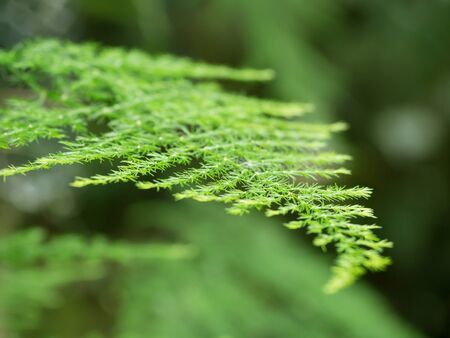 natures: In natures beautiful bright foliage Stock Photo
