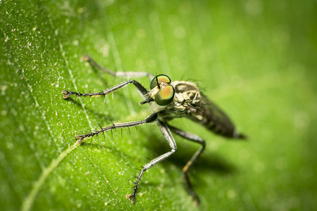 green eyes: A natural insect nature animals live in the wild
