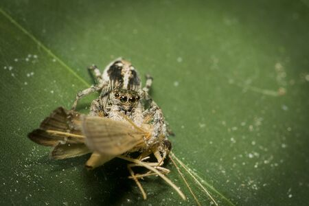 nocturnal: The nocturnal insect prey in nature Stock Photo