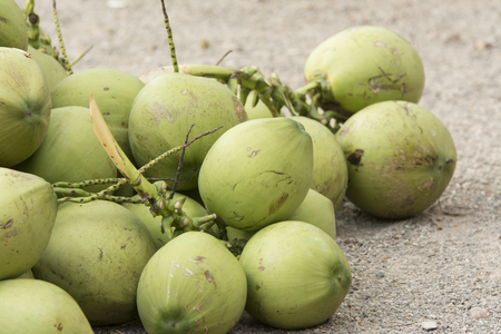 tropical climate: Coconut, Coconut Palm Tree,Thailand, store,Juice, Drink, Green, Tree, Fruit, Tropical Tree, Freshness, Nut, Travel Locations, Nature, Food And Drink, Tropical Climate