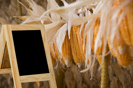 antecedents: Message boards, behind corn, black background blur colorful background for display or editing products Stock Photo