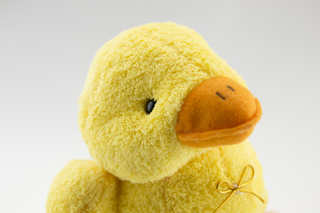 quack: Stuffed duck on a white background abstract background
