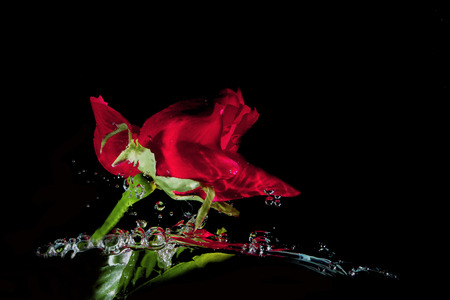 motion blur: red rose in the water on black background Motion blur