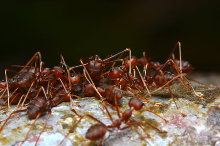 abstract food: army of ants macro