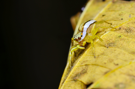 arachnoid: Spider in natural forests, brown leaves on a black background Stock Photo
