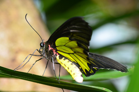 transmute: Beautiful butterfly emerges from a cocoon