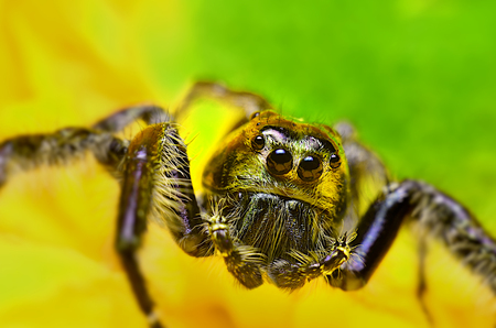 smaller: Spiders Jumping spiders are generally smaller