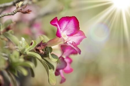 admired: Multi colored flowers are grown as ornamental plants