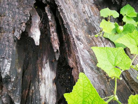 Pianta che cresce su legno su sfondo verde in Natural background