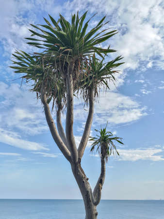 Tons of palm trees in the background, sea view