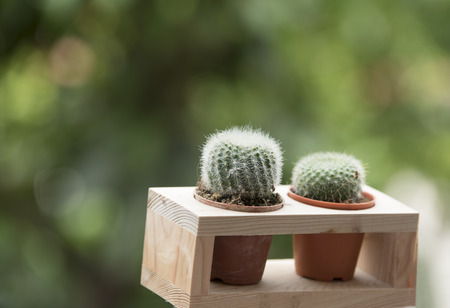 variable: Isolated cactus in a pod in Natural background Stock Photo
