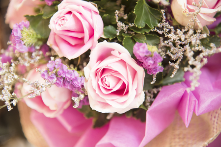 Many roses are arranged in rows  as natural background or wallpaper. Stock Photo