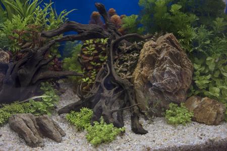 Heavily planted freshwater aquarium on Natural background