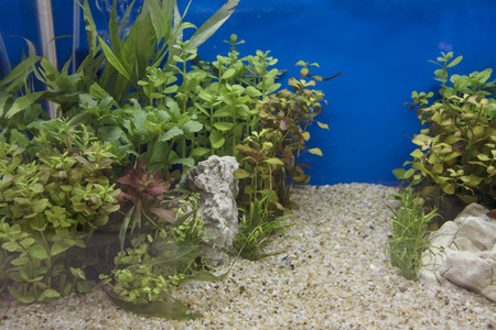 Heavily planted freshwater aquarium on Natural background