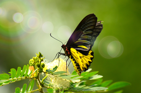 A butterflys natural image on green leaves, blurred background in a garden with beautiful lighting.