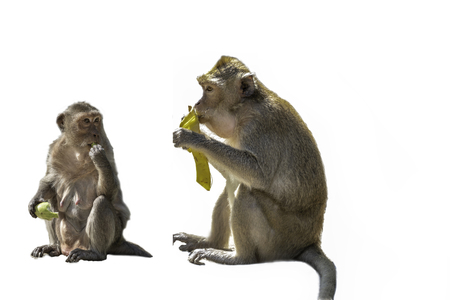 Two monkeys on a white background