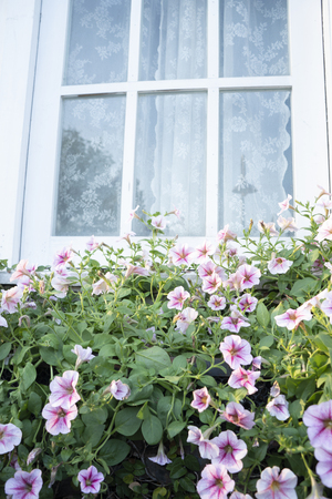 Colorful flowers outside the house window Stock Photo - 118845861