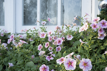 Colorful flowers outside the house window Stock Photo - 118845862