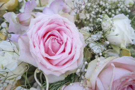 Many light colored roses for Mother's Day and Valentine's Day Stock Photo - 118846032