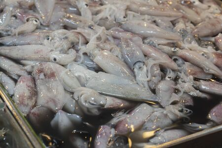 Squid in fresh market on Thailand.Sea Food 写真素材